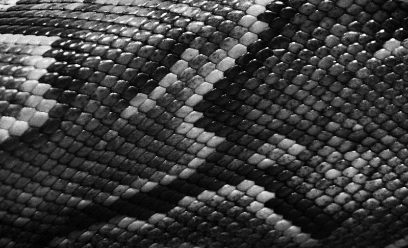 The-texture-Skin-Python-1326213392_96